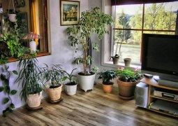 Как упростить полив комнатных растений?
